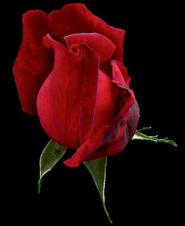 #cuorelucymy #Lucymy #mialu #flowers #larosa #wow #rosa #rose #rosalucymy