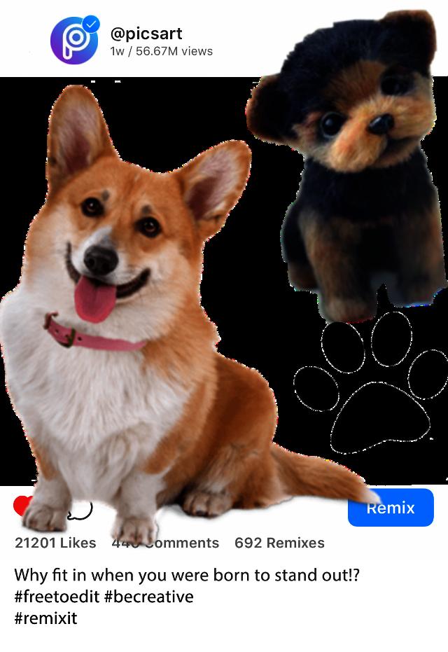 #dog #voteforme😘