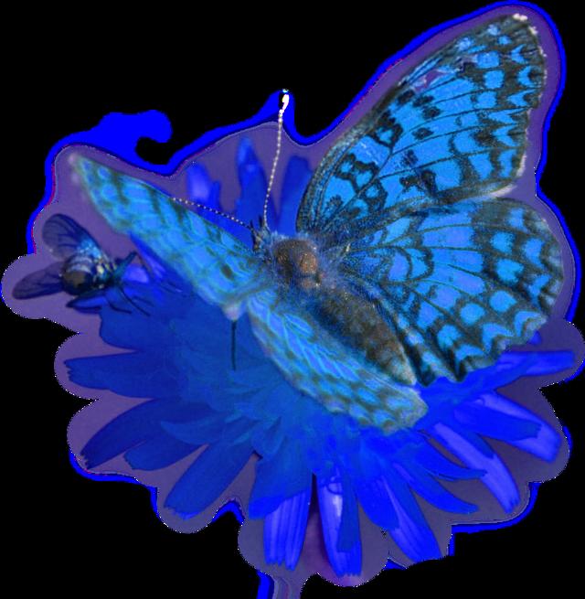 #blue#butterfly