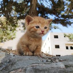 kittiecat freetoedit