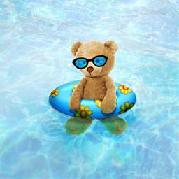 swimming vacation summer water teddybear freetoedit
