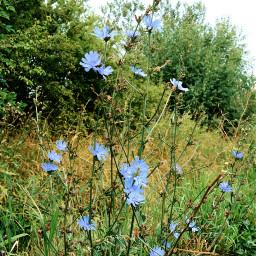freetoedit wildflowers