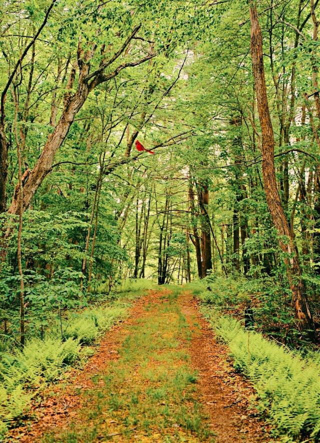 #freetoedit #outdoors #nature #naturelover #road #green #happines #bird #adventure #travel #adventuretime #travel #traveltime #edit #myedit #fun #outdoorfun #trees #summer #summervibes #greencolor #outdoorfun #loveit