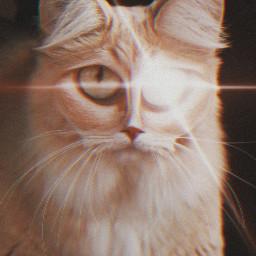 freetoedit creepy lasereye cat ilovecats irckittylove