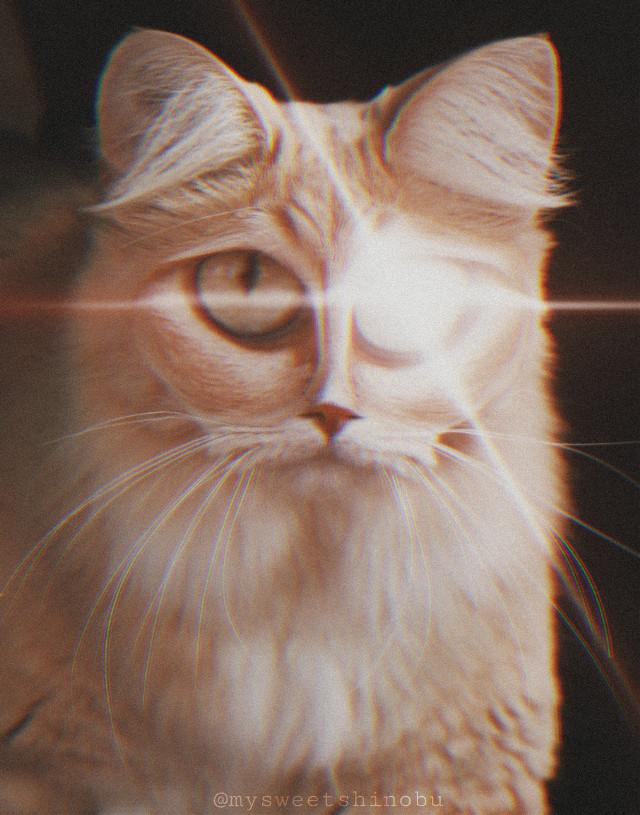 #freetoedit #creepy #lasereye #cat lol #ilovecats 🐱 #grungefilter #inflatetool #lensflare