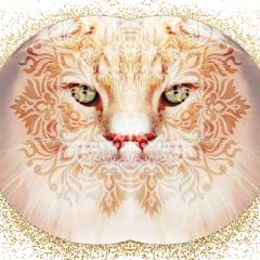 mooncat freetoedit irckittylove kittylove