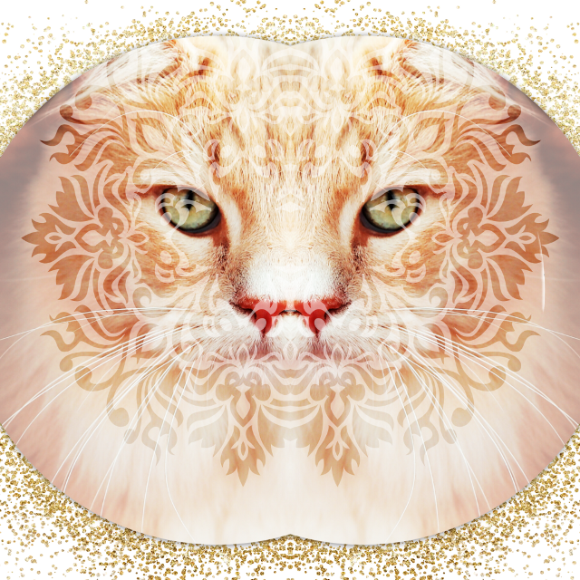 #mooncat