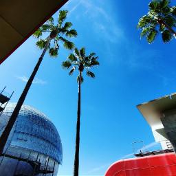 lacma palmtrees palmtrees🌴 losangeles socal
