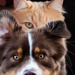 freetoedit photobomb dog cat funny