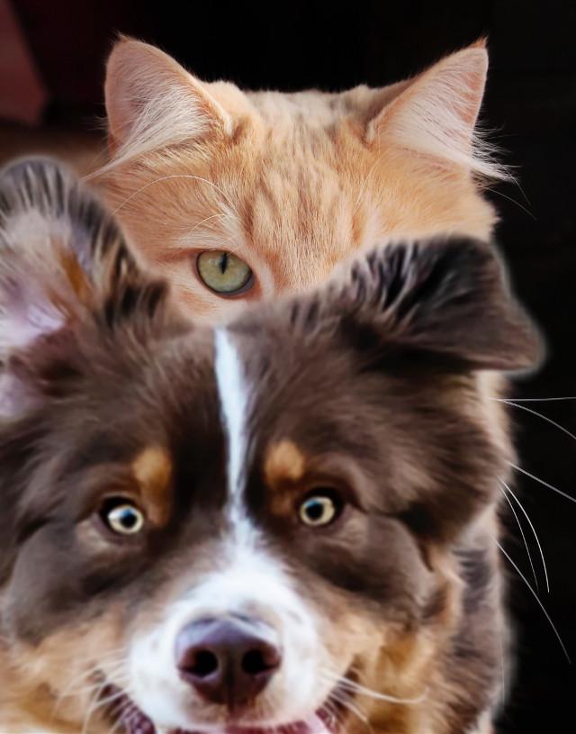 #freetoedit #photobomb #dog #cat #funny