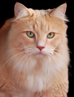 freetoedit kittylove