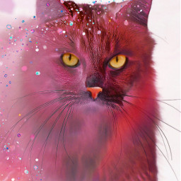 freetoedit catsofpicsart irckittylove kittylove heypicsart