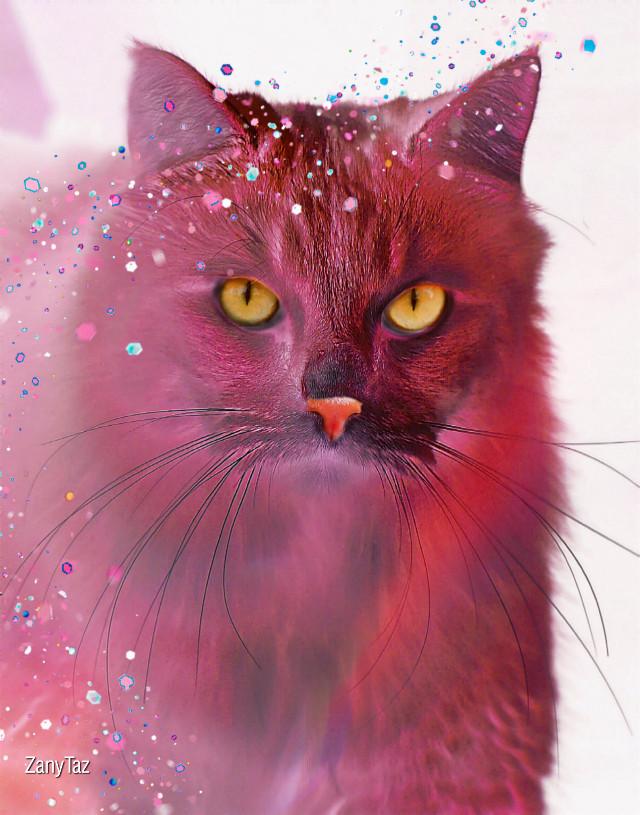 #catsofpicsart #irckittylove #kittylove #heypicsart #manipulation #neon #negativeeffect #pinkfilter #sparkle #cat #be_creative #madewithpicsart #pink #filter #expression 🌸🌿 #freetoedit