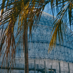 museum socal losangeles palmtrees dome