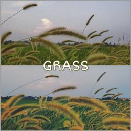 grassandflowers