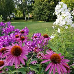 freetoedit naturelover loreak💕 flores loreak