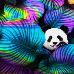 freetoedit holographicbackgrounds panda beautify drawtools