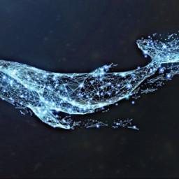 freetoedit whale galaxycircle