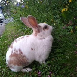 🐰 freetoedit bunny sweden remixit