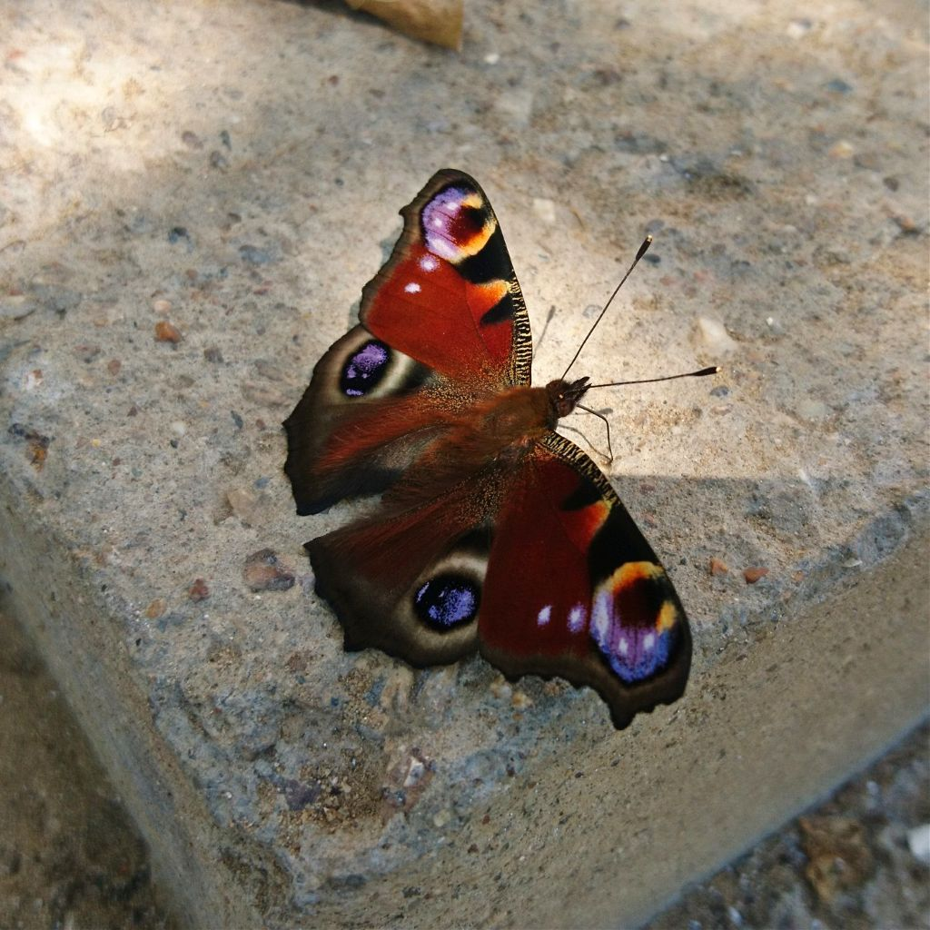 #butterfly #photography #nature #animals