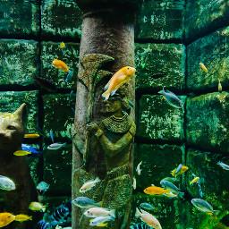 freetoedit aquarium fish