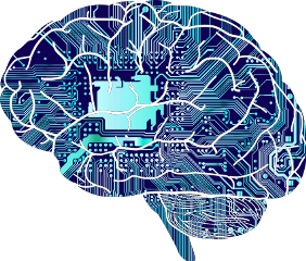 brain anatomy mind biology freetoedit