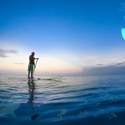 freetoedit ircpaddleboard paddleboard