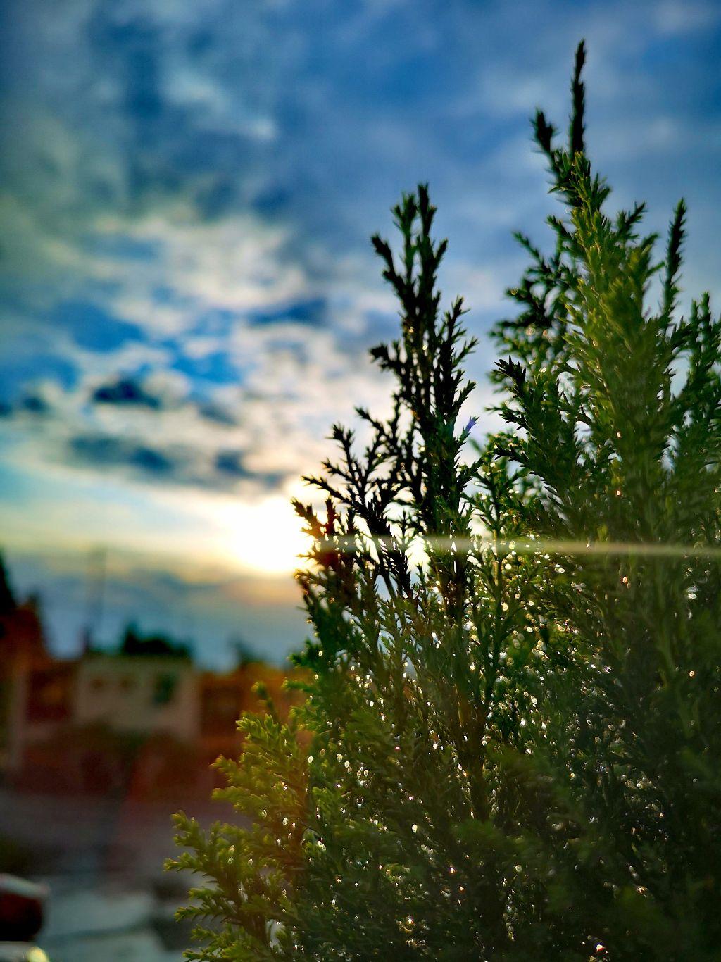 #sunshine #sunset #tree #colorful #rayoflight #clouds #cloudysky