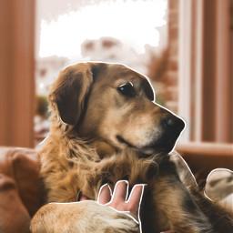 freetoedit собачка тренды рек врекомендации