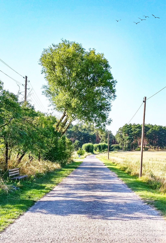 #freetoedit #iloveit #outdoors #nature #naturelover #edit #myedit #summer #summervibes #green #walk #happiness #adventure #adventuretime #travel #vacation #loveit