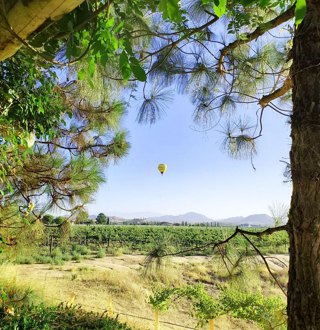 #freetoedit #hotairballoon #winery