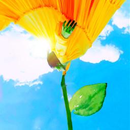 freetoedit flowerdress weird saturation sunshine