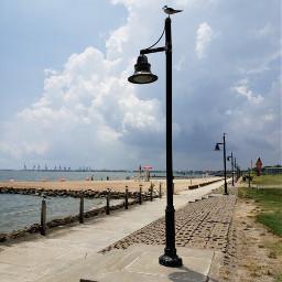 lamp light seagull beach seawall freetoedit