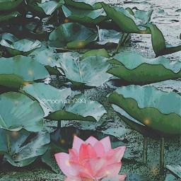 freetoedit flower photography nature