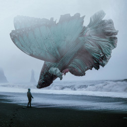 freetoedit surreal fish mist butterfly