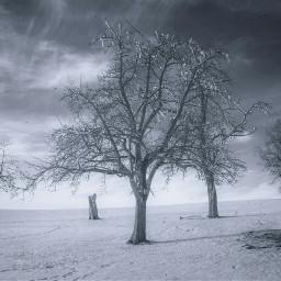 freetoedit tree oldtree trees sand