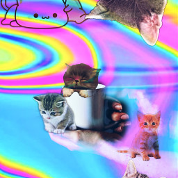 freetoedit cuteanimal kitties loveit myediting