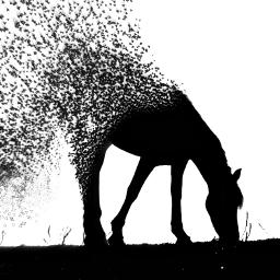 freetoedit edit picsart horse bnw