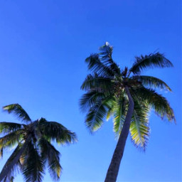 freetoedit naturephotography palmtree summervibes