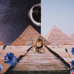 freetoedit imagination lions naturaleza deserted ectraveltheworld