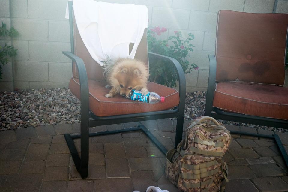 #naughtyboy #dogsofpicsart #dog #chewing #freetoedit