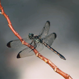 freetoedit nature colorful photography dragonfly