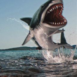 freetoedit hungry shark ocean beach