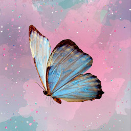 freetoedit butterfly colorful
