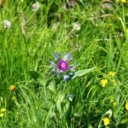 freetoedit nature flower meadow wonderful