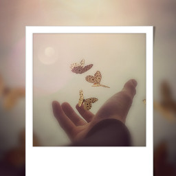 freetoedit retrostyle butterfly polaroid srcretroframe