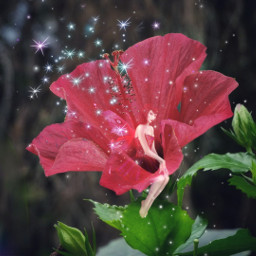 freetoedit flower red hibiscus fairy