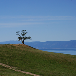 landscape tree panorama summertime bluesky