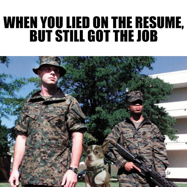 #lying #jobhunting, #jobinterview #gotthejob #resume #lyingonyourresume