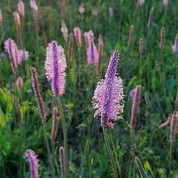 meadow grass nature naturephotography macro pcmyfavshot worldphotographyday